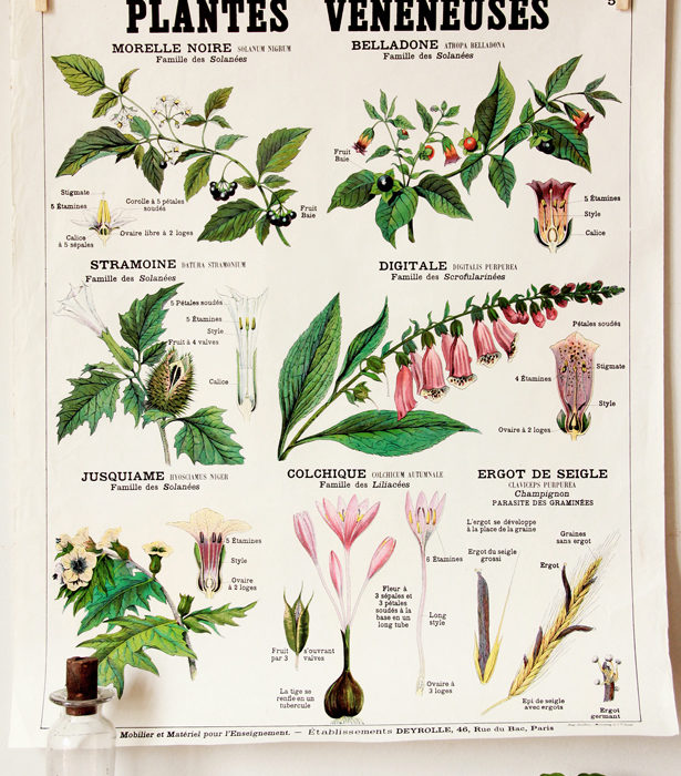 poison plants